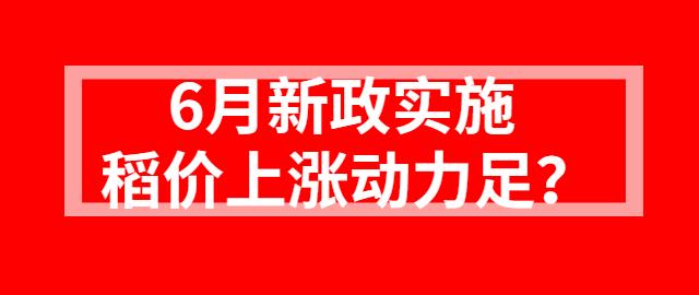 【独家】6月新政实施  稻价上涨动力足?
