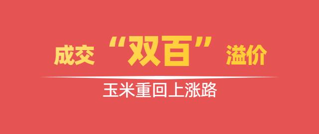 """【独家】成交与溢价""""双百"""",玉米重回上涨路"""