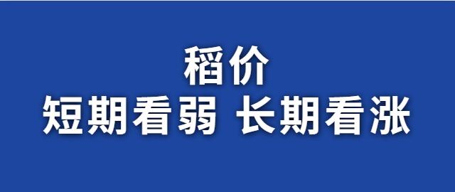 【独家】稻价短期看弱 长期看涨