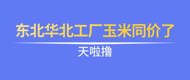 【独家】天啦撸,东北华北工厂玉米同价了