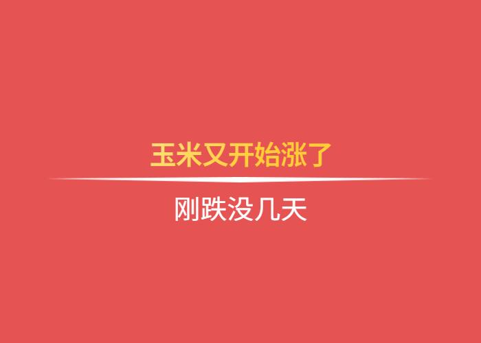 【独家】刚跌没几天,网上百家乐试玩:玉米又开始涨了
