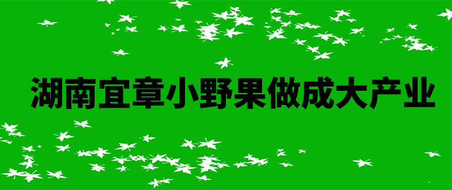 湖南宜章小野果做成大产业