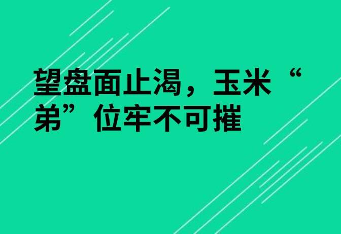 """【独家】望盘面止渴,玉米""""弟""""位牢不可摧"""