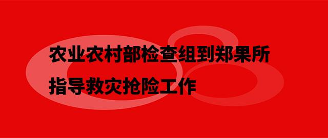 农业农村部检查组到郑果所指导救灾抢险工作