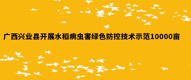 广西兴业县开展水稻病虫害绿色防控技术示范10000亩