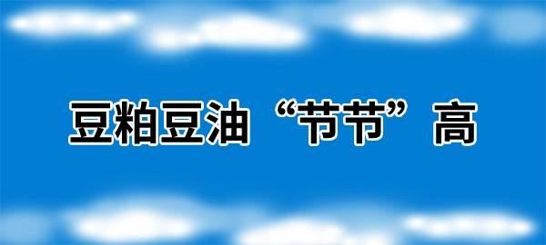 """【独家】豆粕豆油""""节节""""高"""