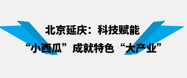 """北京延庆:科技赋能 """"小西瓜""""成就特色""""大产业"""""""