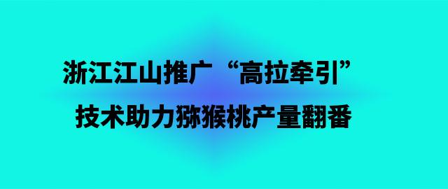 """浙江江山推广""""高拉牵引""""技术 助力猕猴桃产量翻番"""