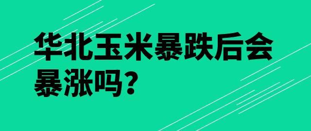 【独家】华北玉米暴跌后会暴涨吗?