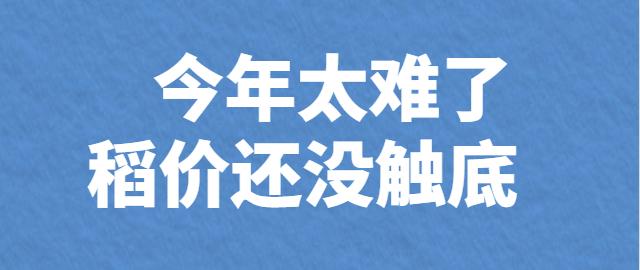 【独家】今年太难了  稻价还没触底