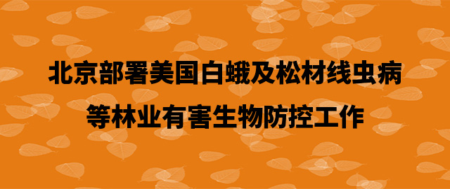北京部署美国白蛾及松材线虫病等林业有害生物防控工作