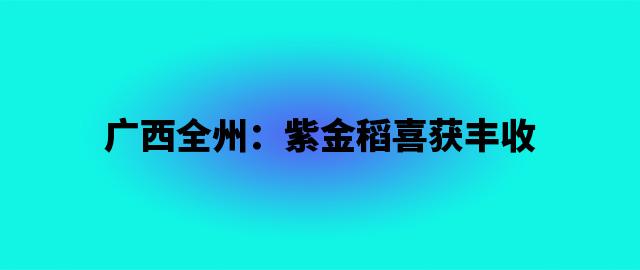 广西全州:紫金稻喜获丰收