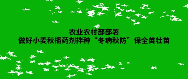 """农业农村部部署做好小麦秋播药剂拌种""""冬病秋防""""保全苗壮苗"""