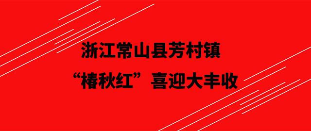 """浙江常山县芳村镇""""椿秋红""""喜迎大丰收"""