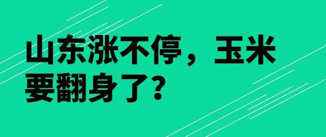 【独家】山东涨不停,皇冠足球网:玉米要翻身了?