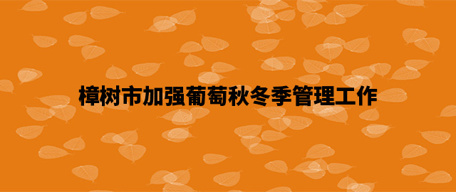 江西樟树市加强葡萄秋冬季管理工作